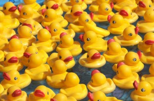 Rubber Duckie Races